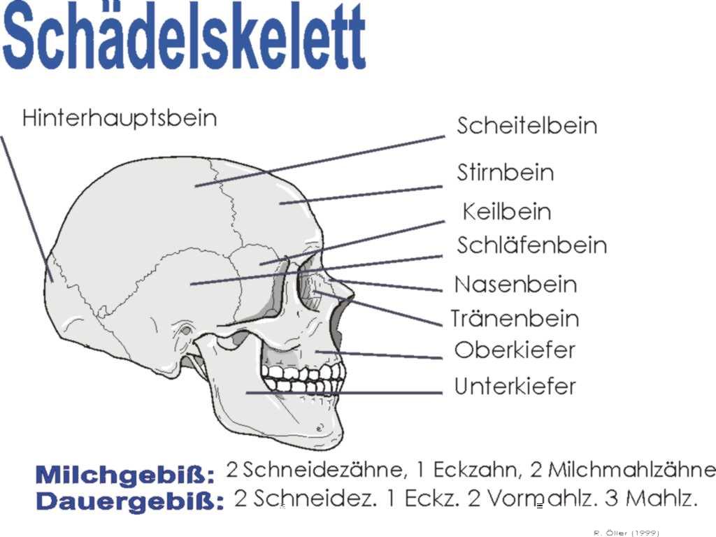 Kopfschuß